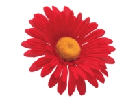 Electra Bar Part Sunflower Flower Red - Bike Maniac
